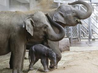 Slony v pražskej ZOO