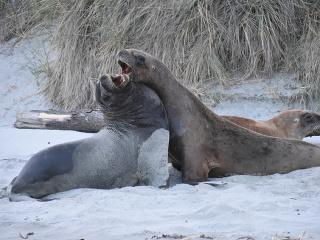 Jedinečná fauna Nového Zélandu