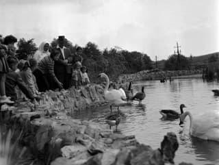 Historická fotografia bratislavskej Zoo