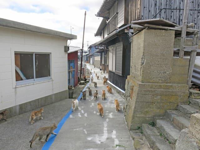 Mačky v Japonsku