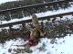 Vlk zaútočil na jelenča