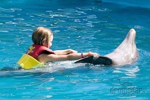 Svoj k svojmu. Delfíny
