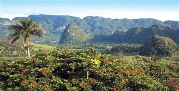 Tabakové plantáže v údolí