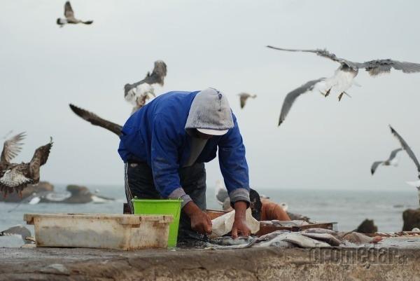 Miestny rybár, Essaouira