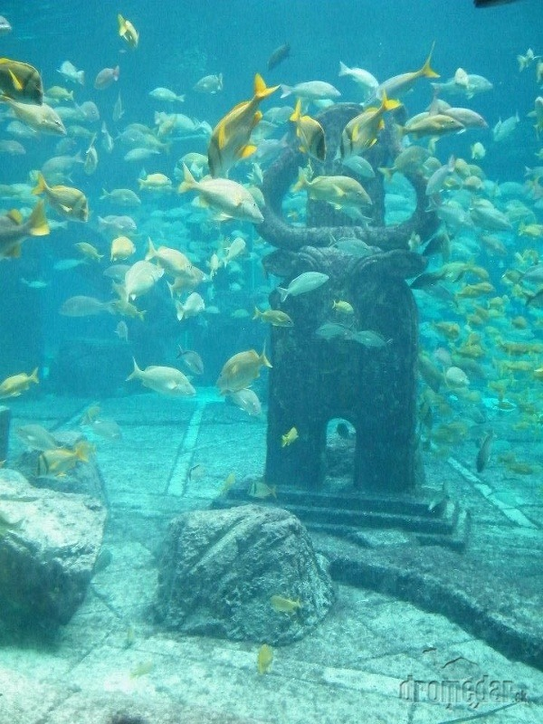 Akvárium v hoteli Atlantis