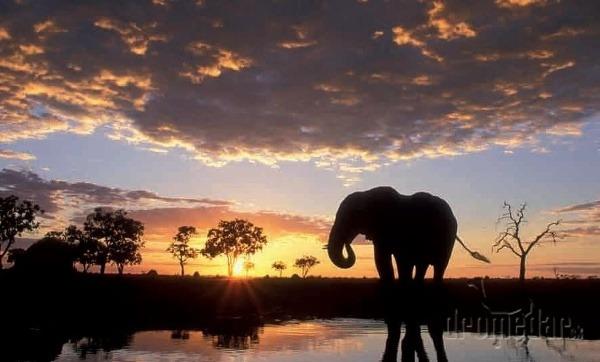 Slony patria k bežným