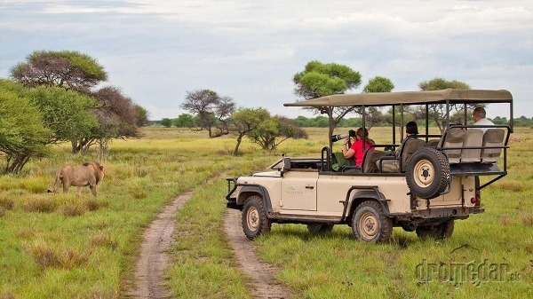 Safari, Botswana
