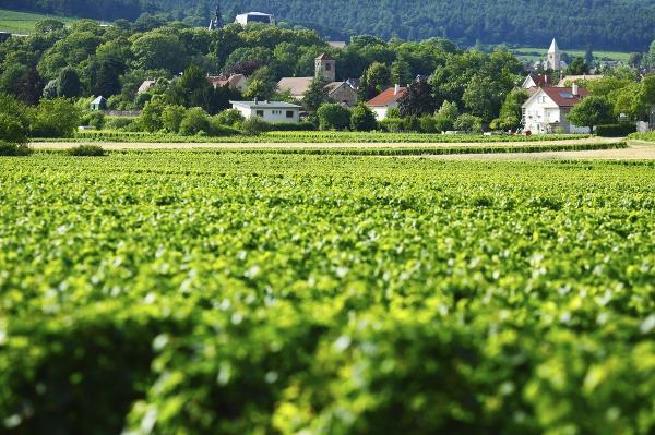 Vinice v Burgundsku, Francúzsko