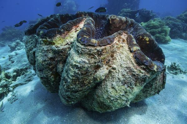 Veľká koralová bariéra, Austrália