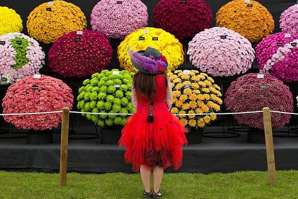 Chelsea Flower Show, Londýn,