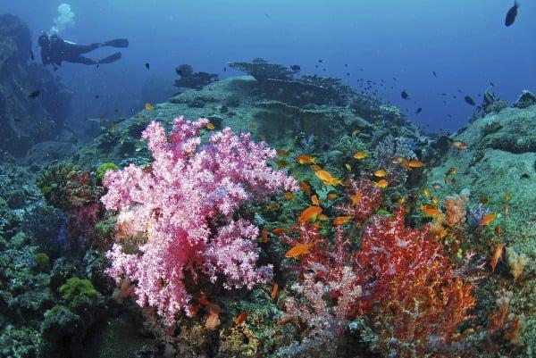 Koraly v Similane, Thajsko