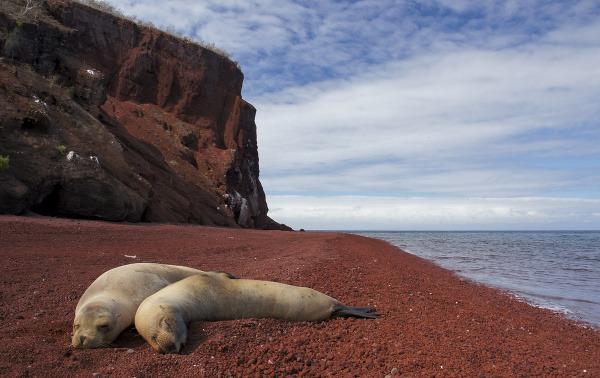 Tuleni na pláži, Galapágy