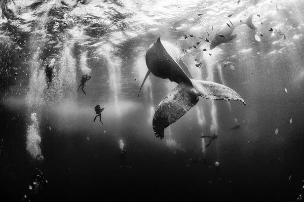 Whale Whisperers - Šepkajúce