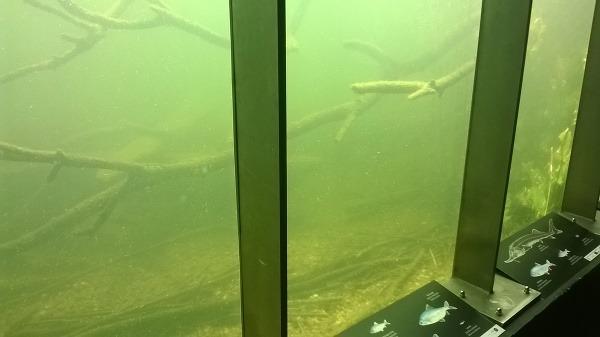 Pod jazierkom sa dajú