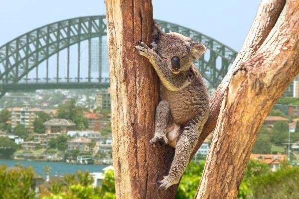 Niektorým obyvateľom Sydney je