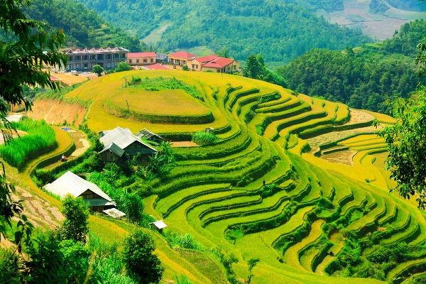 Mu Cang Chai