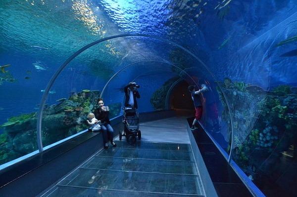 Národné dánske akvárium, Kodaň,