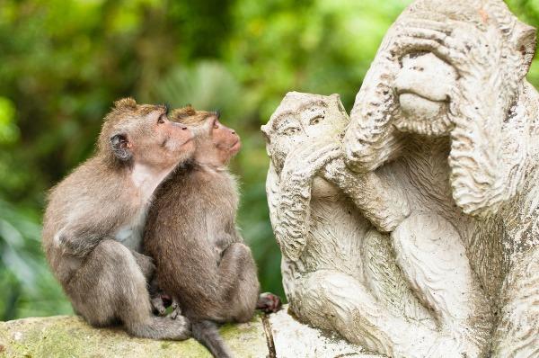 Miesto, kde opice kraľujú