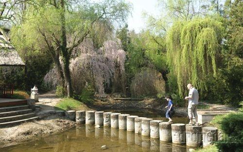 Arborétum, Mlyňany