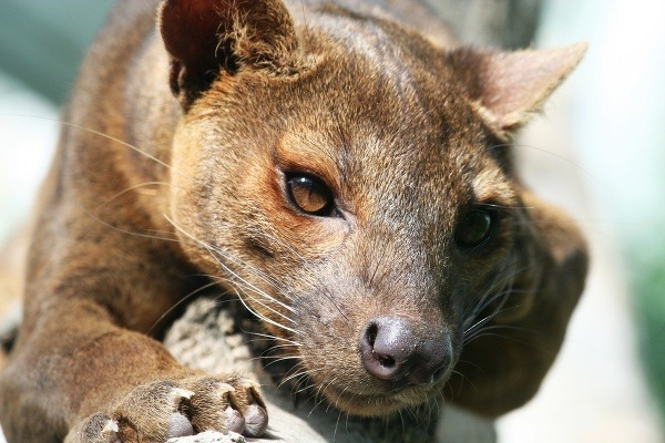 Madagaskar a jeho vzácni