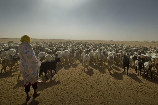 Darfúrski utečenci