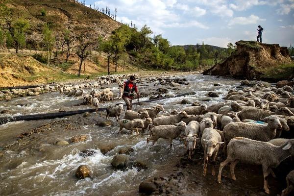 Na snímke kašmírsky pastier