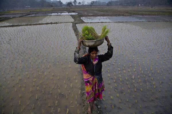 Roľníčka nesie sadenice v