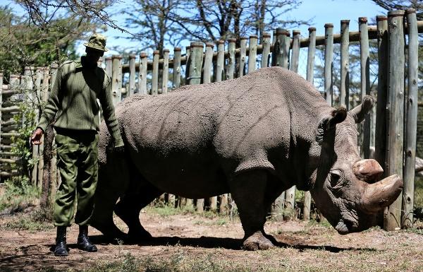 Sudán, posledný samec nosorožca