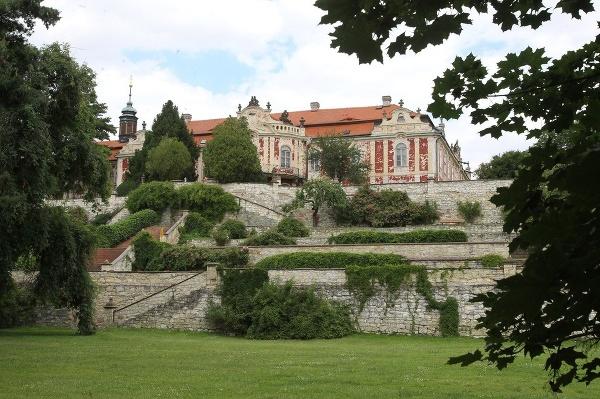 Steklík, Česká republika