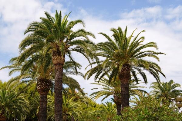Palmová riviéra, Taliansko