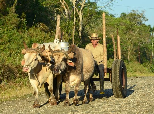 Vinales, Kuba