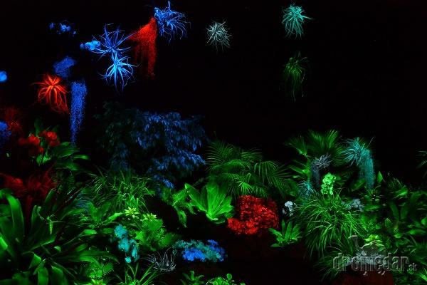 Botanická záhrada Univerzity Pavla