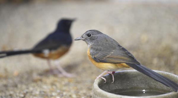 b IG vtáky