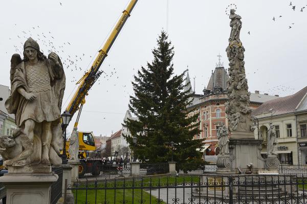 Vianočný strom douglasku tisolistú,