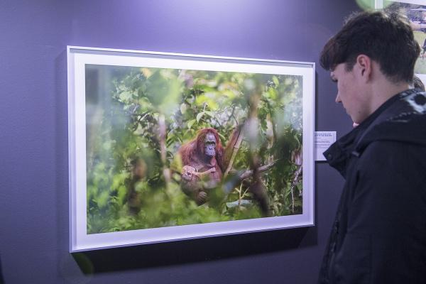 Snímka z výstavy nominovaných
