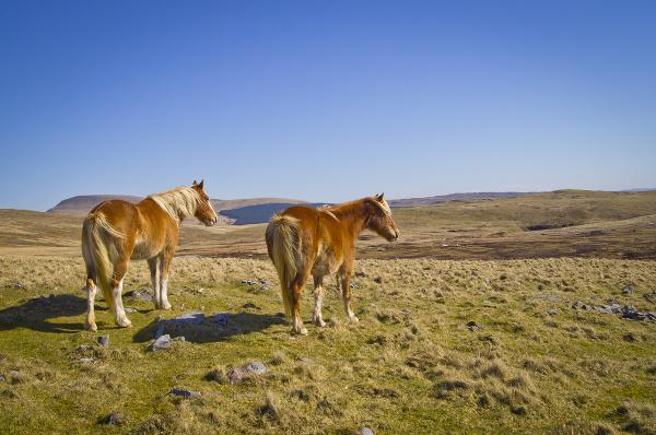 Divoké kone v NP