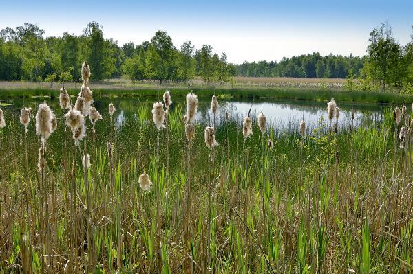 Přírodní rezervace Soos, Česká