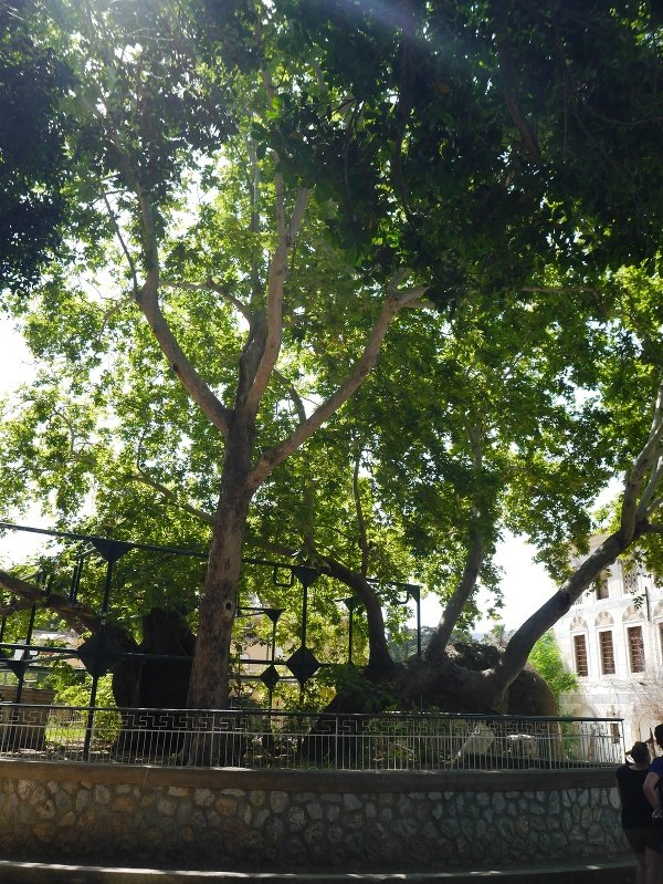 Hippokratov strom