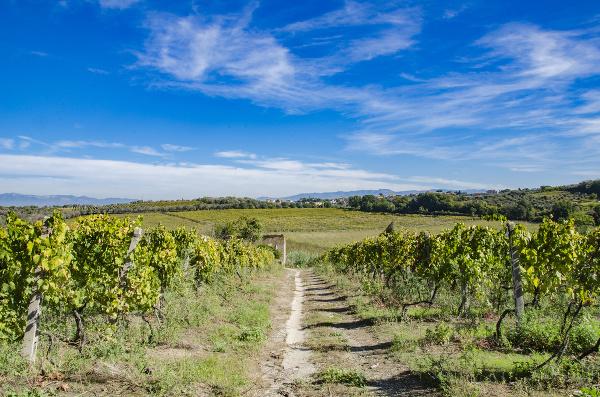 Vinica vo Frascati
