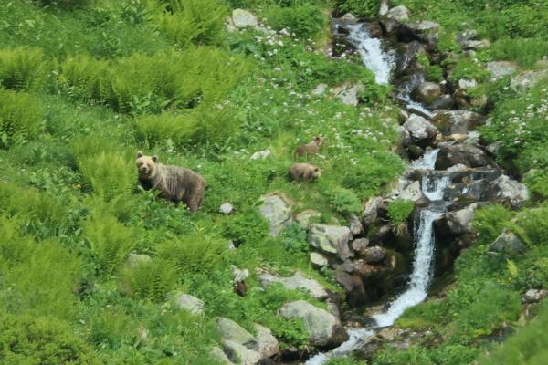 Pozorovanie medveďov v Západných