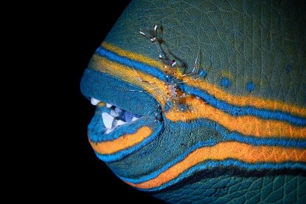 Fascinujúci podmorský svet okom