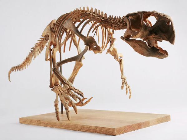 Kostra psittacosaura