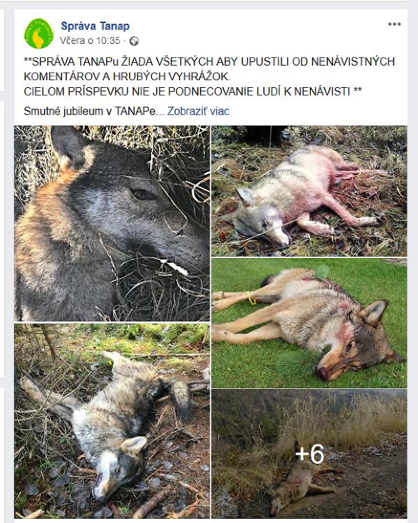 Petíciu proti odstrelu vlkov
