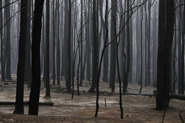 Lesné požiare v Austrálii