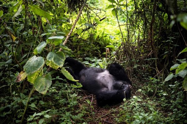 Gorily v Rwande