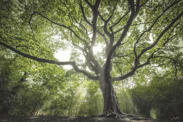 Desať najkrajších stromov Európy