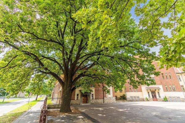 Strom slobody v Kaposvári,