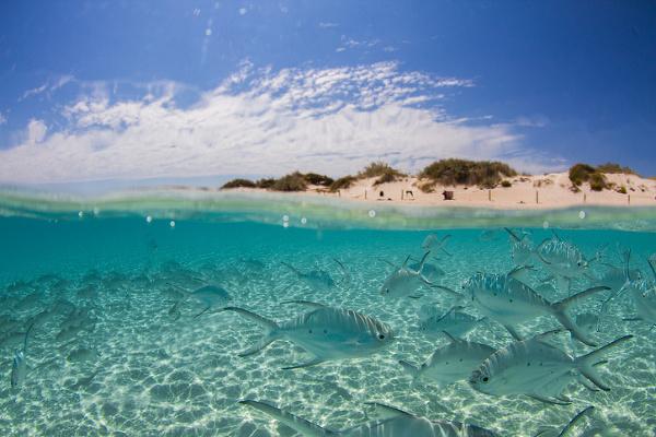Útes Ningaloo, Západná Austrália