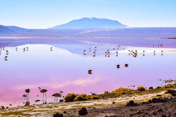 Colorada, Bolívia