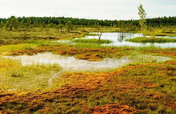 Soomaa, Estónsko